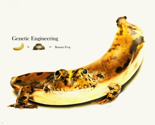 A simple introduction about genetic engineering.?