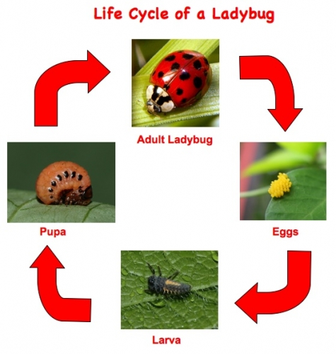 Animal Life Cycle Today you will become an expert on the life cycle of ...