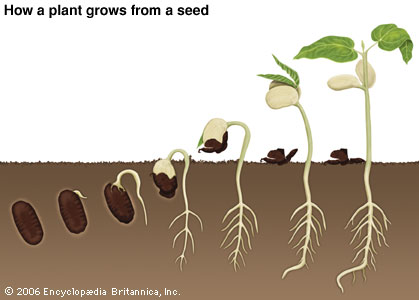 Seed Clipart as well B C Dbc in addition True Wait True as well Matchup Og additionally Match The Other Half Of The Picture Animals. on parts of a plant worksheet kindergarten