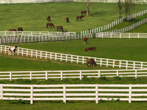 The Horse Industry in Kentucky: Introduction