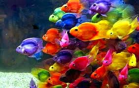 Plankton marine food cycle adventure process for Cool pet fish