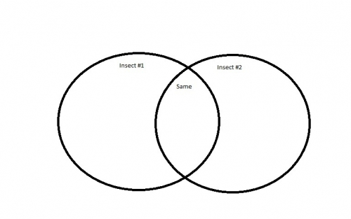 what does a venn diagram look like it s a buggy bug world