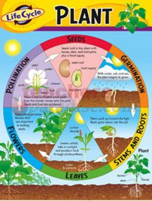 Life Cycles of Plants: Introduction