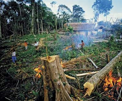an introduction to the reasons for the destruction of the rainforest Rainforests around the world are being lost at an alarming rate in this article we  investigate the causes and effects of deforestation, and look at.